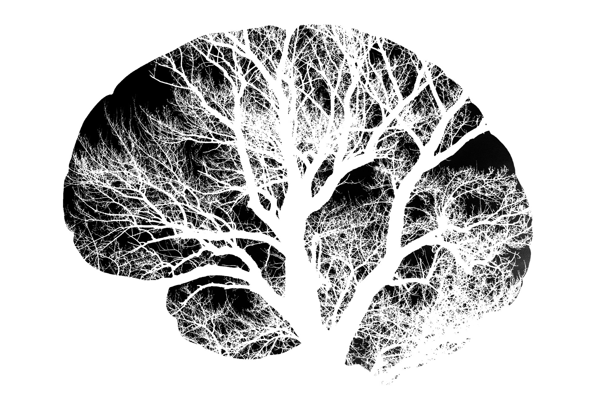 Acupuntura y las respuestas neuronales del cerebro